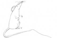 Aus dem Skizzenbuch - Maus